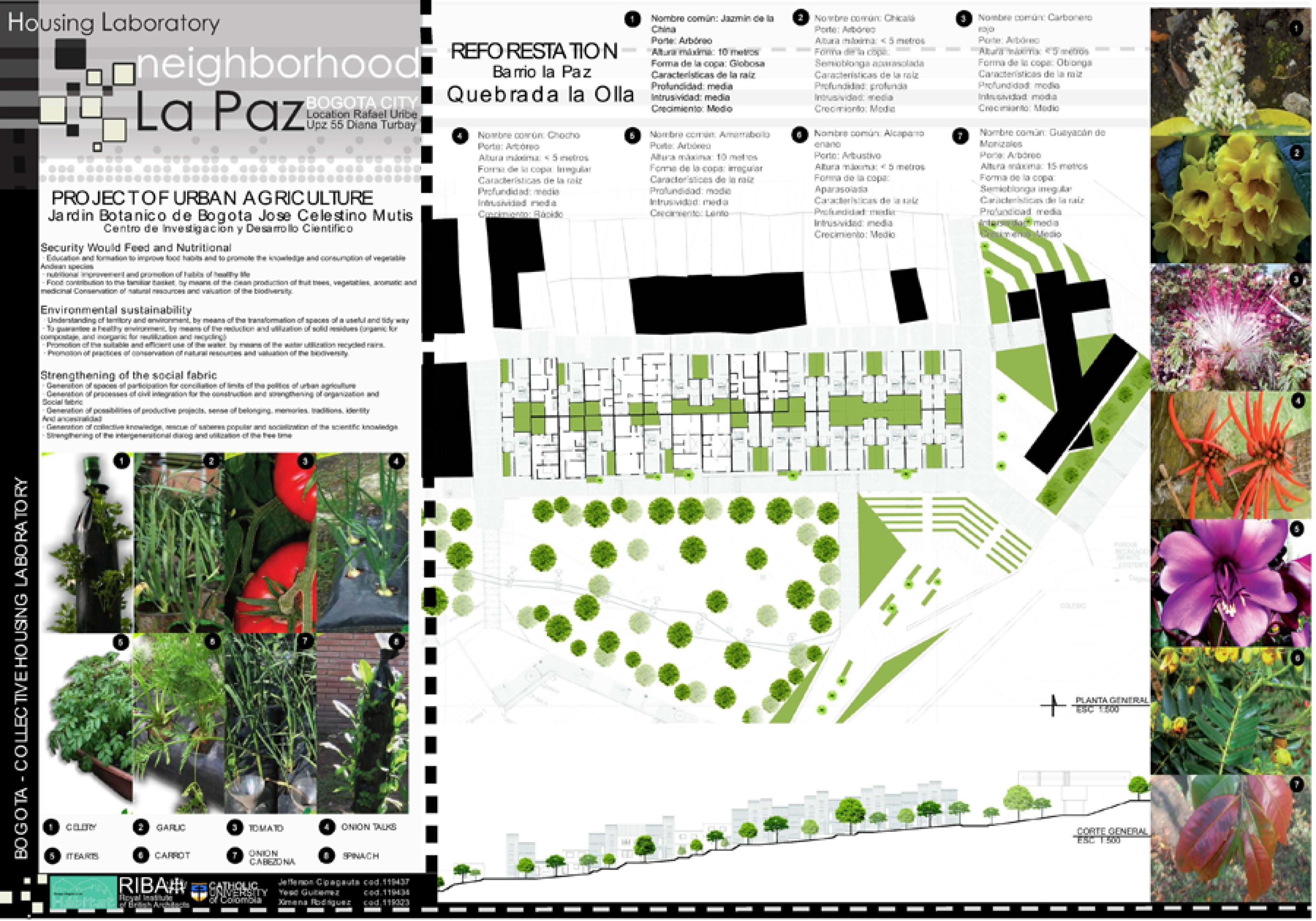 Proyecto de Vivienda la Paz (2).jpg