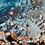 Thumbnail: Sea Snail