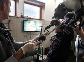 Zaehne-Endoskopie.jpg