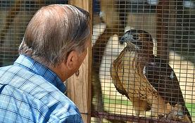 Eying the hawk.jpg