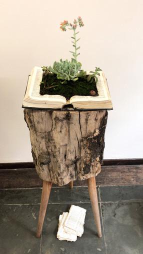 Livro Floresta: Voltar a Ser Árvore