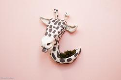 Girafa Sustentável