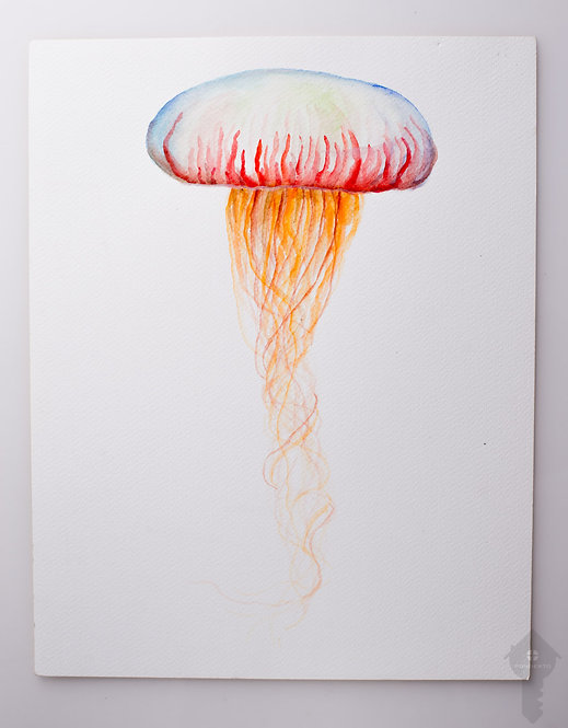 "Pas Schaefer _ ""Watercolour Jellyfish"""