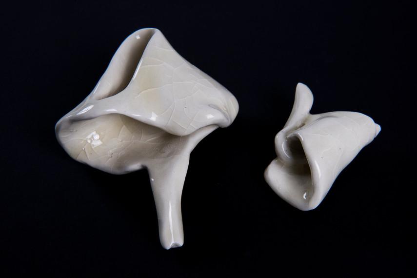 Conchas de porcelana