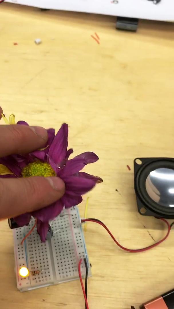 Amplificador Etnobotânico