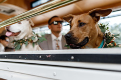 Precious Pics Wedding Photography and Videography in Miami, FL.19