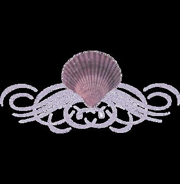 seashell-flourish-seashell-divider-11563220546hexhwrcnqc.png