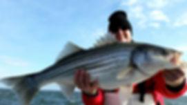 chesapeake bay rock fishing