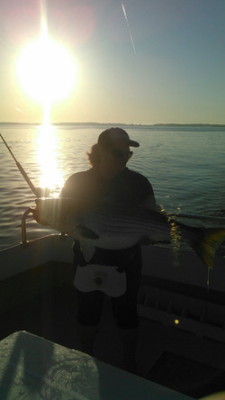 Rockfish 24