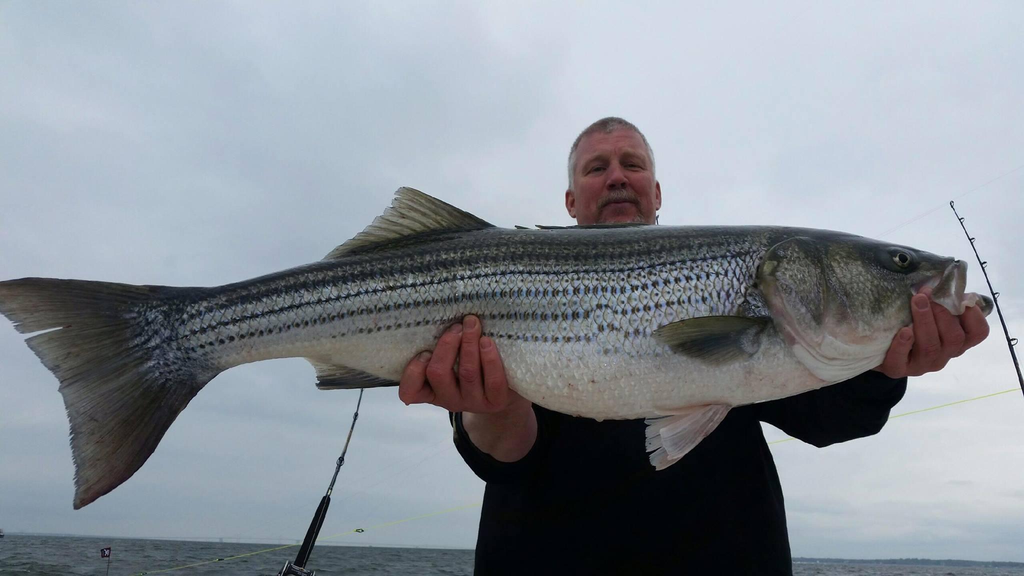 Rockfish 11