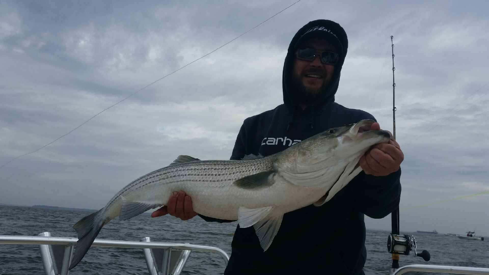 Rockfish 15