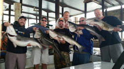 Chesapeake bay fishing 2,Rockfish 17