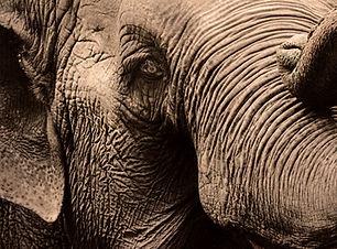 riverside elephant park_edited.jpg