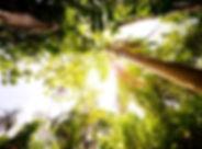 The Flame Tree Estate Hotel Trees.jpg