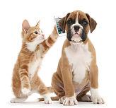 DogCatAndPhone900.jpg