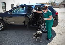 vet tech in mask taking dog from back seat of owners car