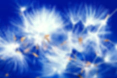 dandelion-seeds-letting-go-freedom-blue-