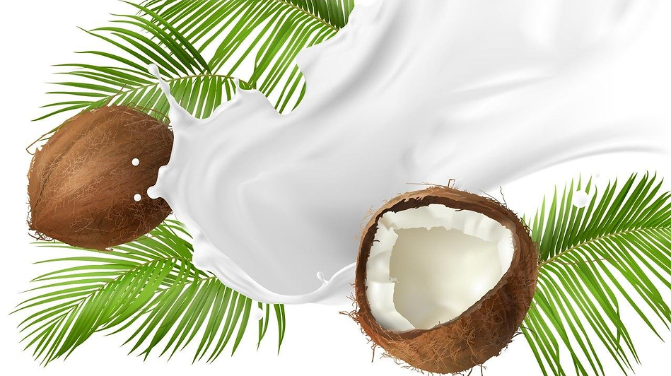 Coconut and coconut milk.png