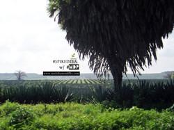 Farmer rows.