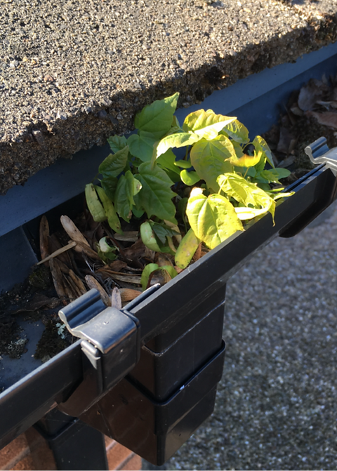 Blocked gutter downpipe in Rayleigh