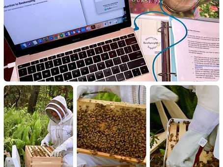 Introduction To Beekeeping!