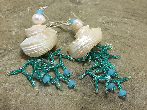 Coral shells