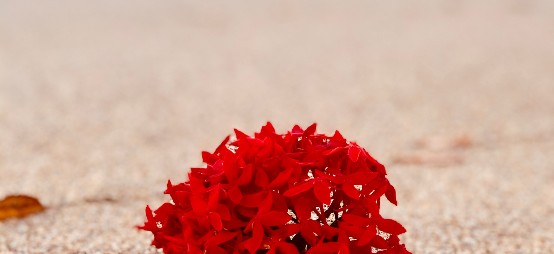 Red Beach Flower