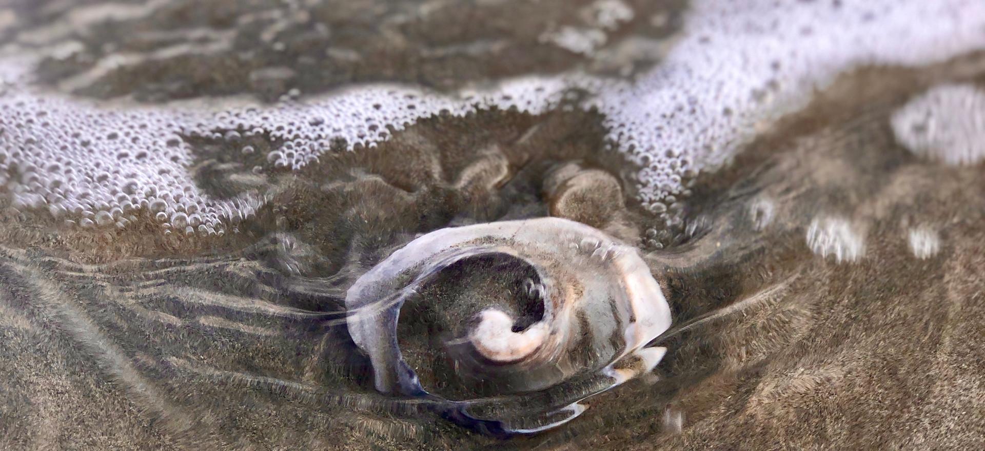 Spiral Shell on Beach