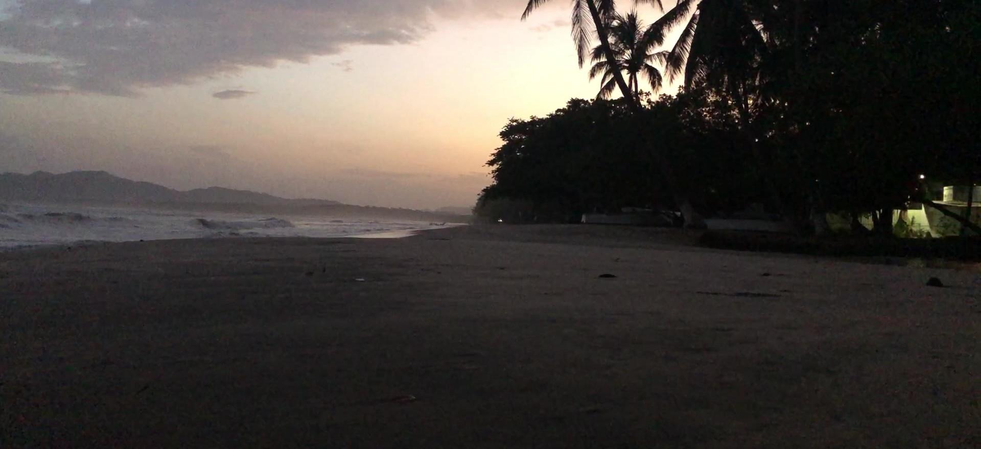 Zen Space, Little Beach Bird at Firsr Light