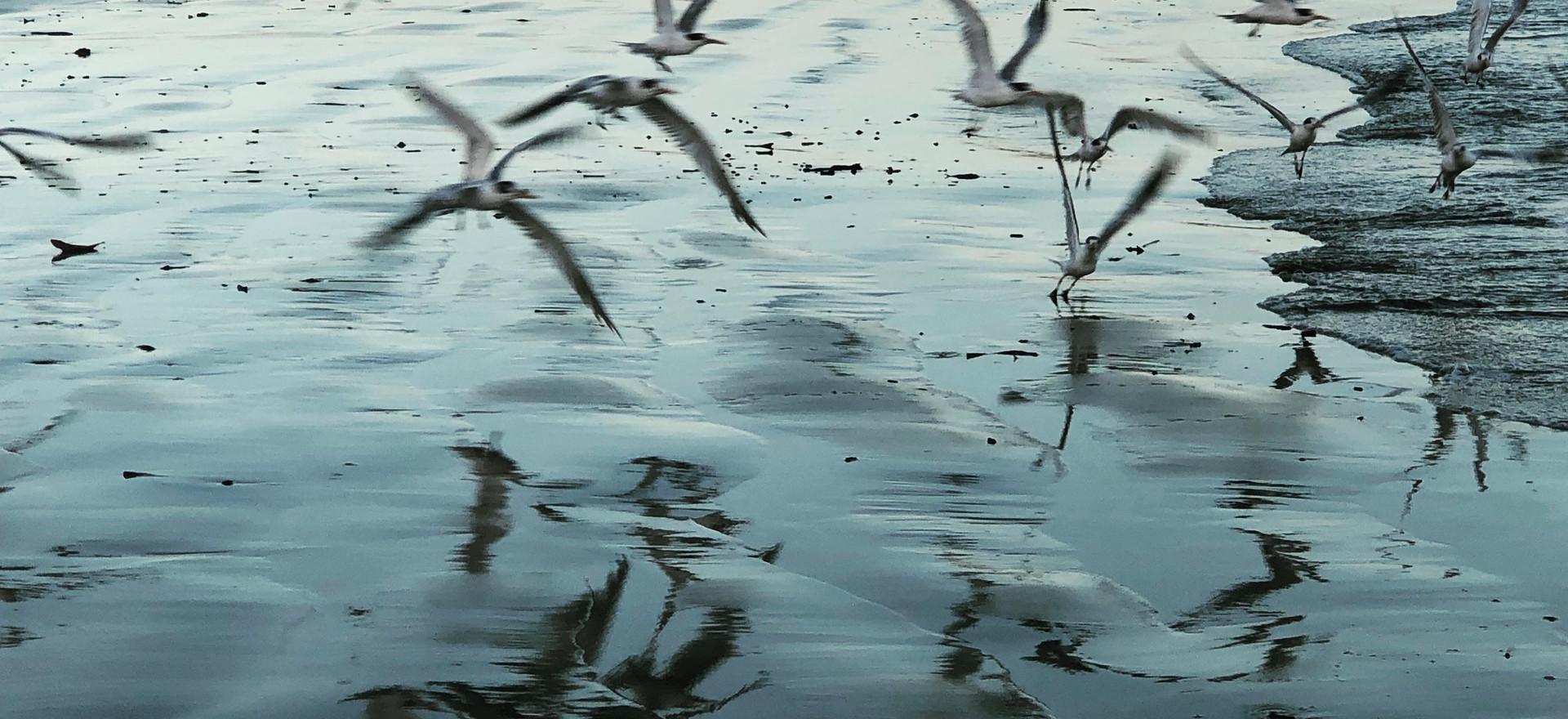 Bird Reflections on Sunrise Shore
