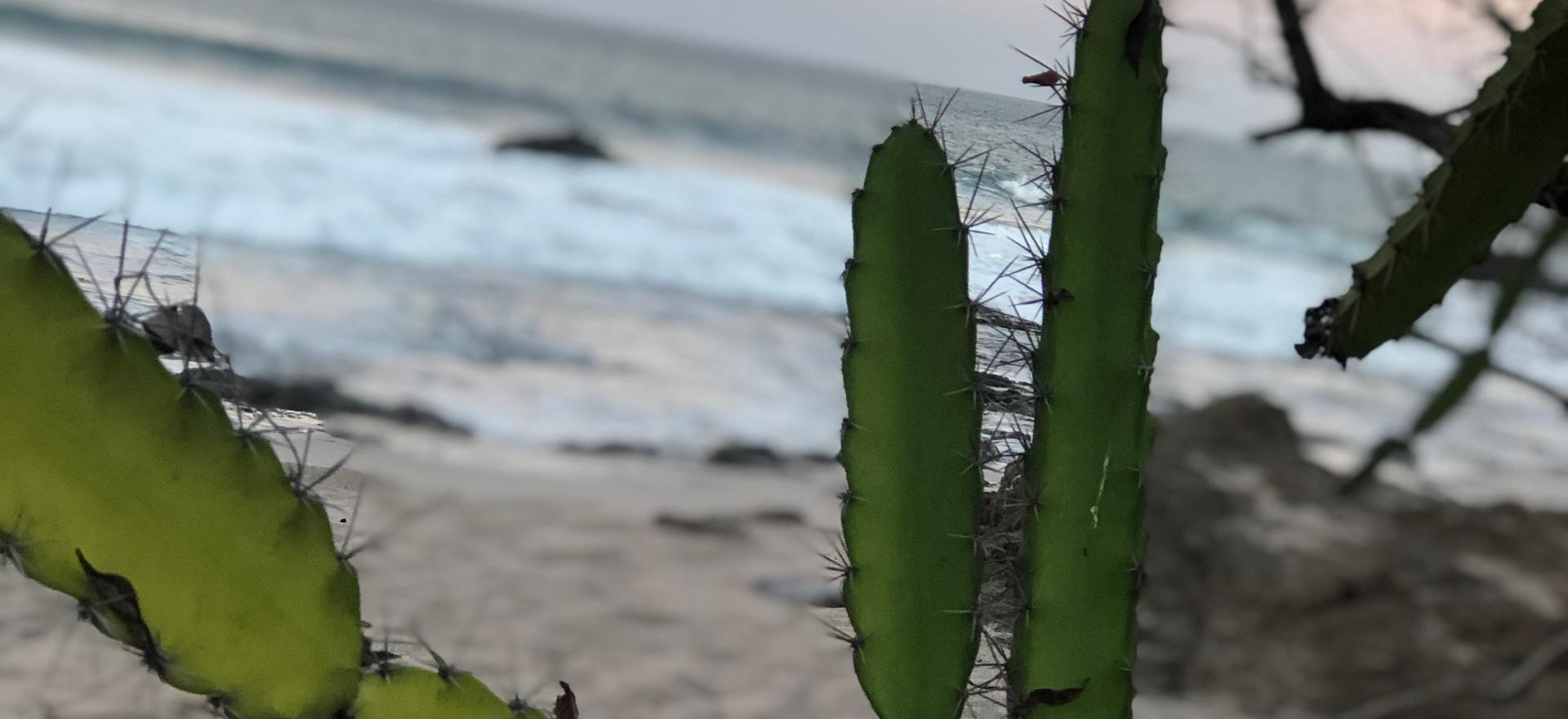 Cactus Beach First light