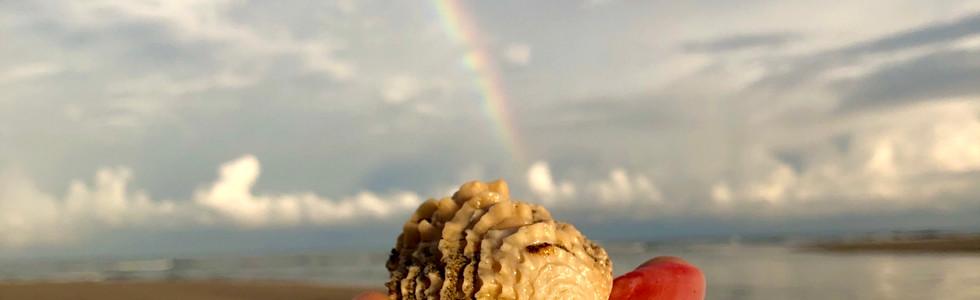 Pot of Tropical Gold