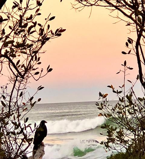 Falcon Sunrise
