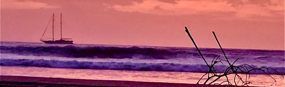 Purple Tropical Waters
