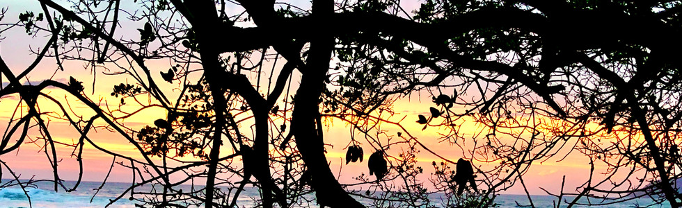 Tropical Dream Evening