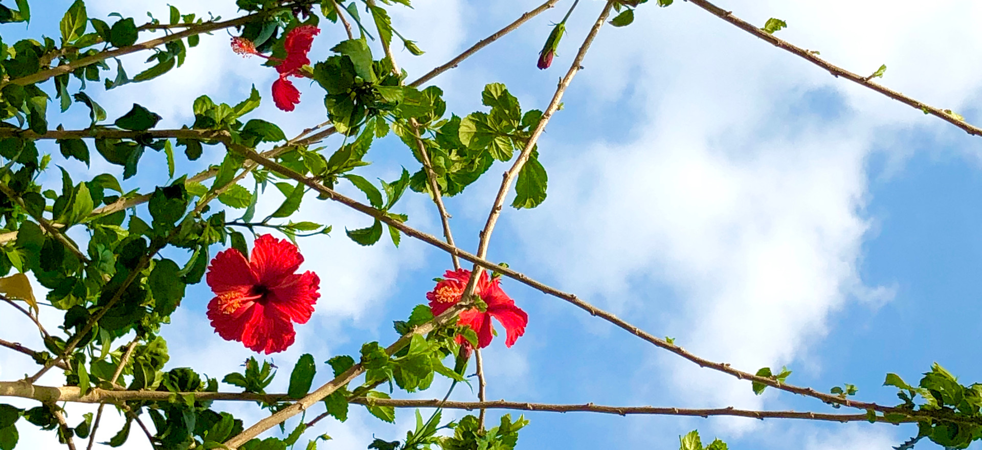 Tropical Blooms and Sky