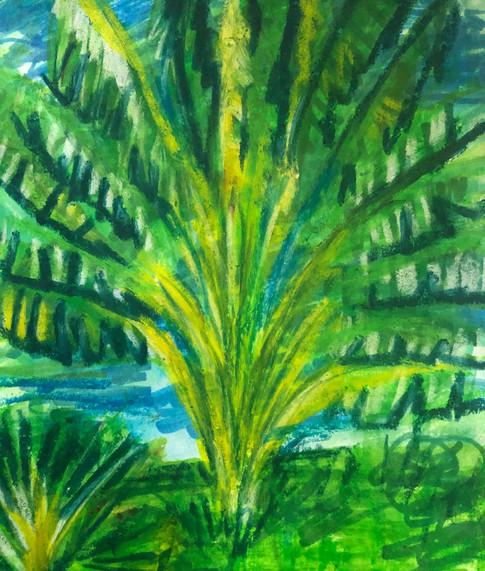Travelers' Palm