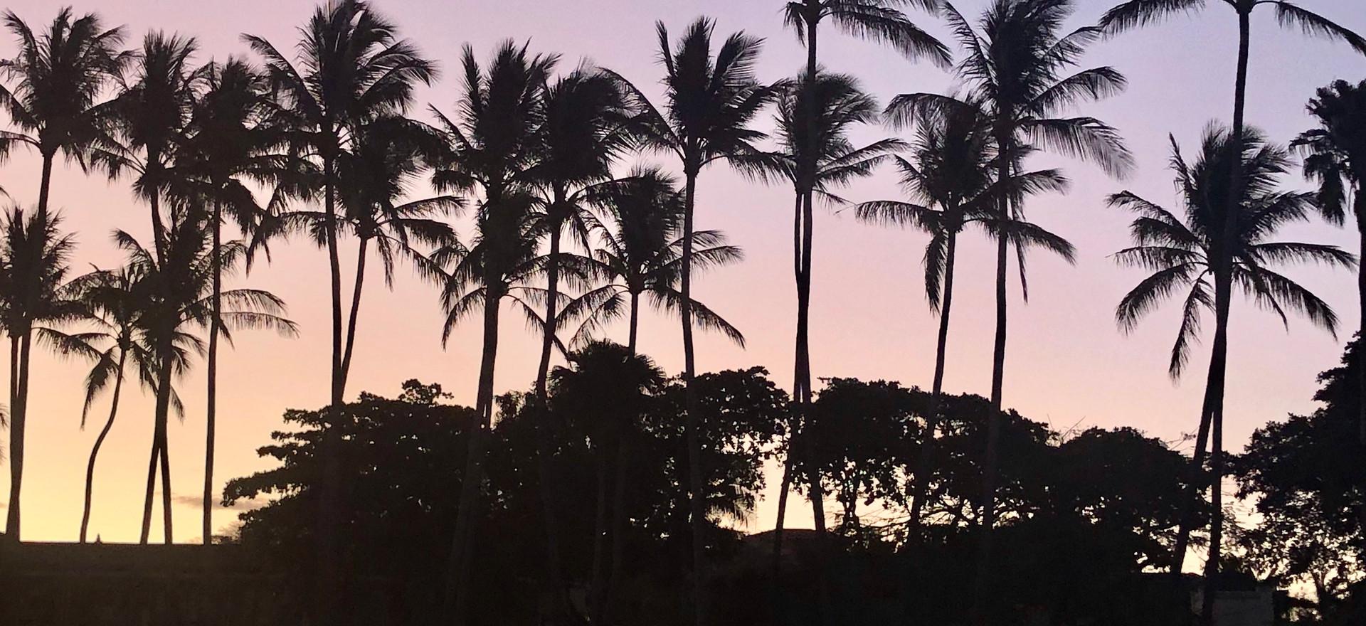 First Light Behind Palms
