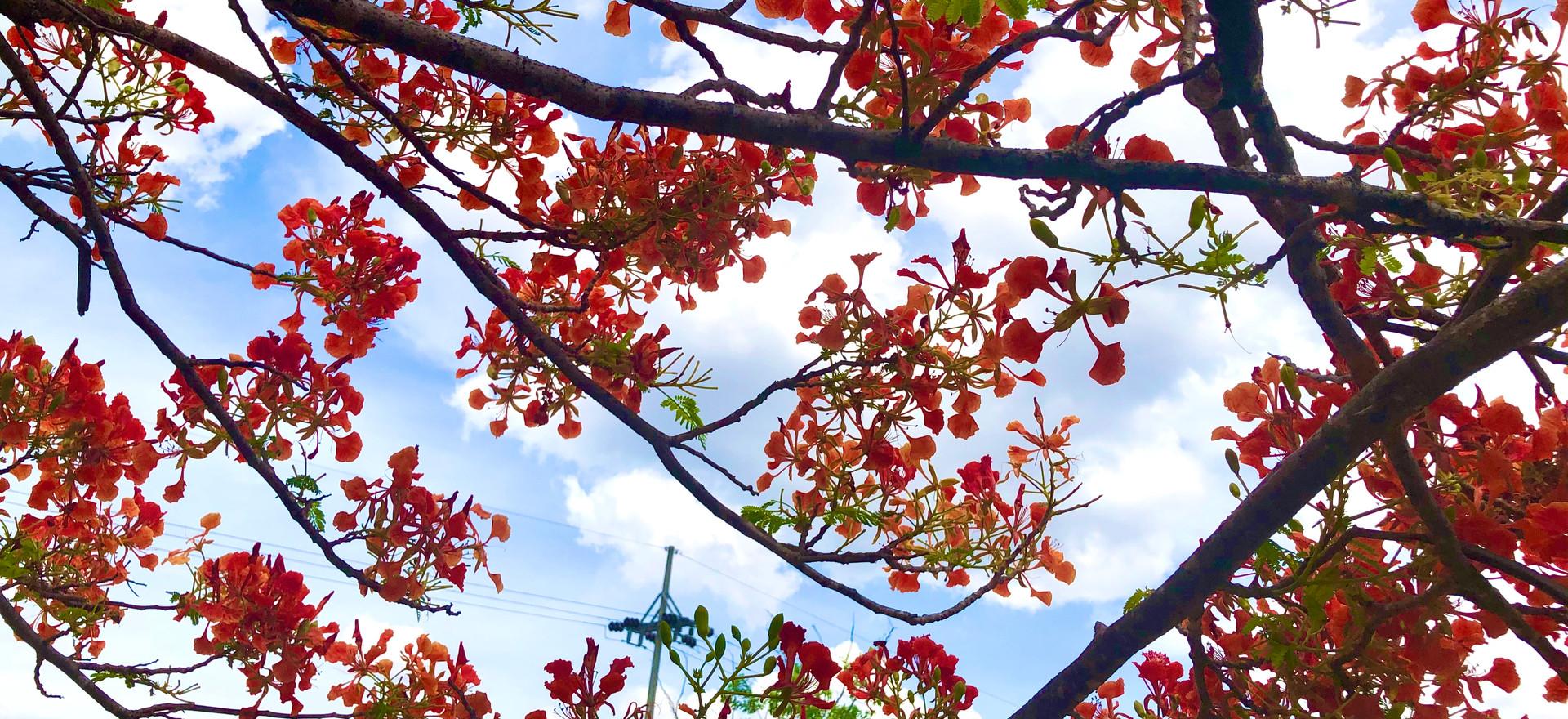 Red Flowers Blue Sky