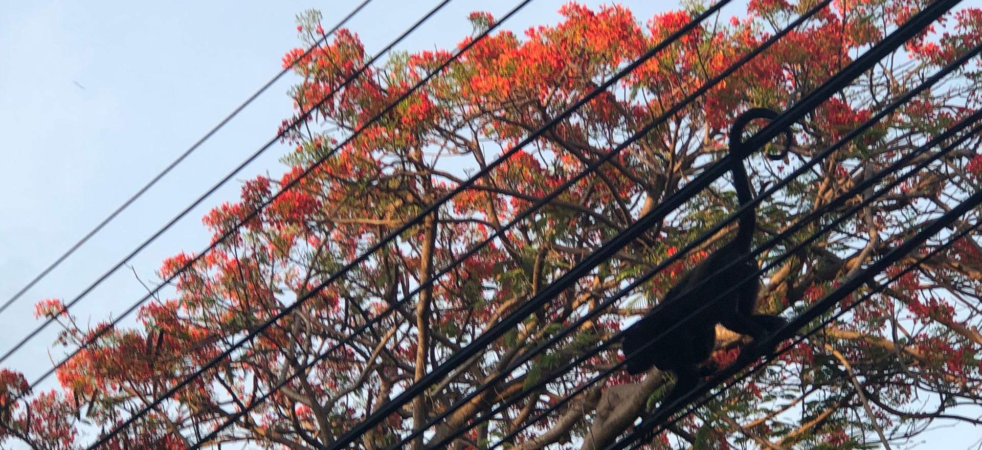 Monikers and Birds in the Tropics