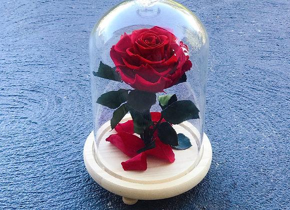 Everlasting Rose Red MYstory (Inc. LED)