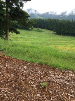 牧場の風景