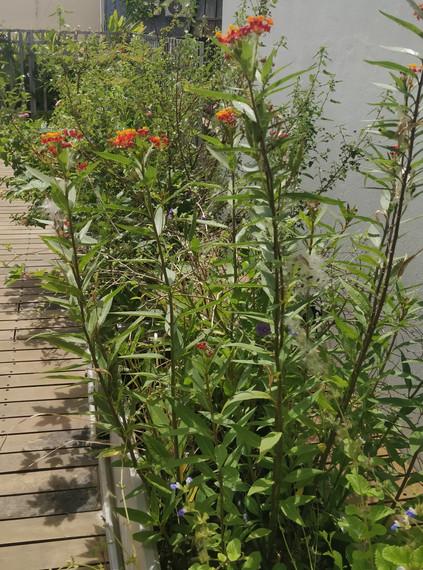 Cassa Lepage garden