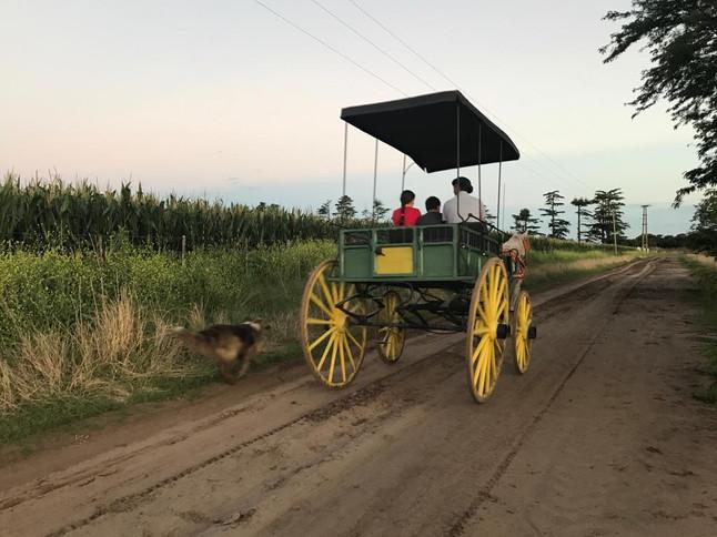 Paseos en carruaje