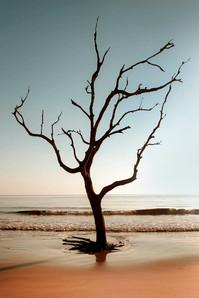 Dignity Tree #1