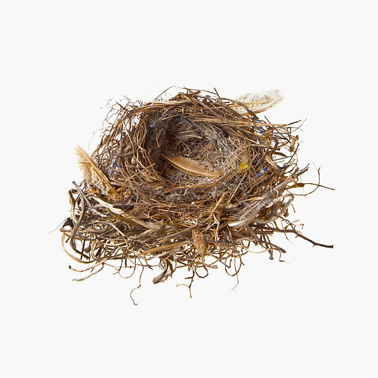Feathered Nest