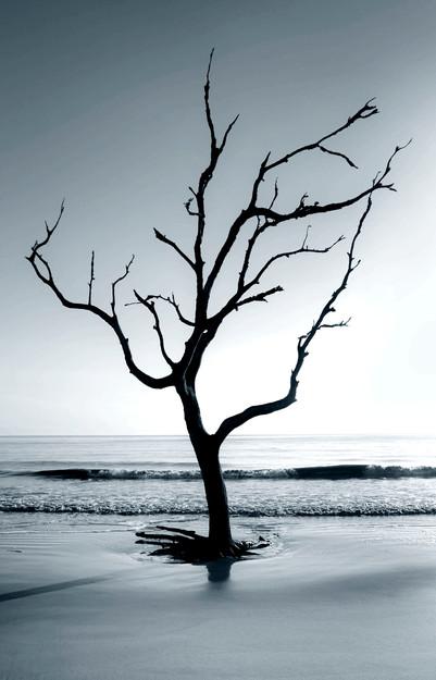 Dignity Tree #2