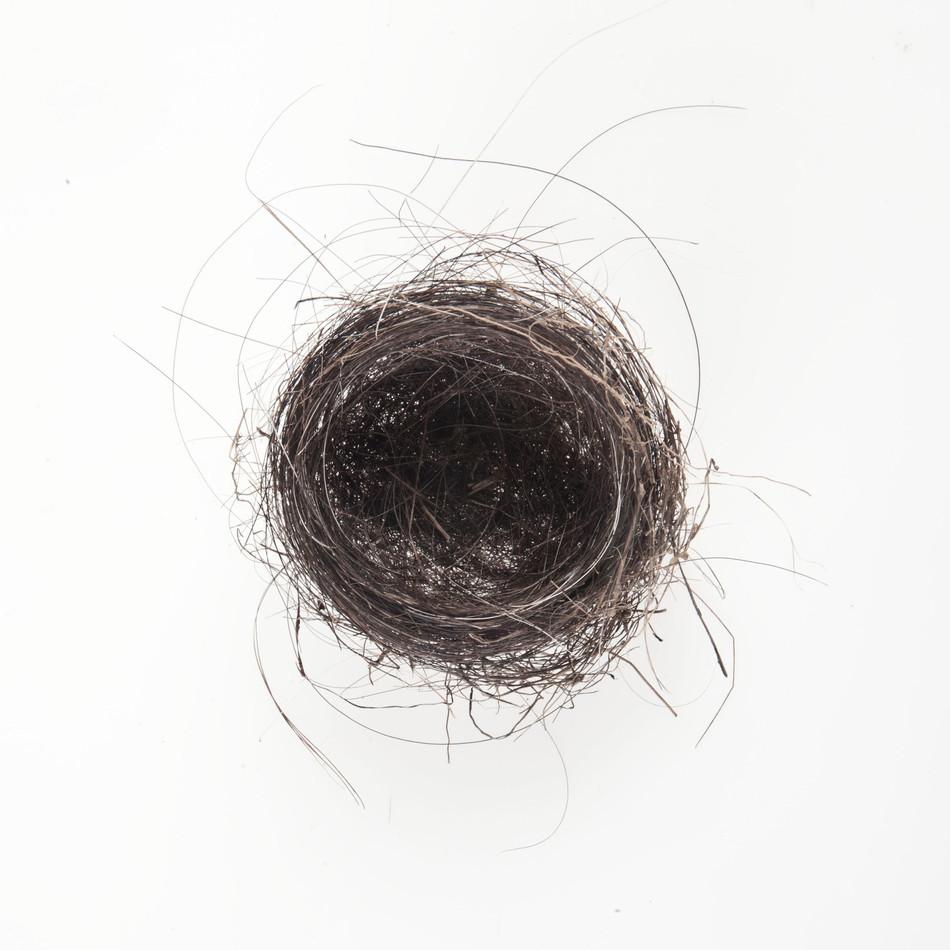 Horse hair Nest #6