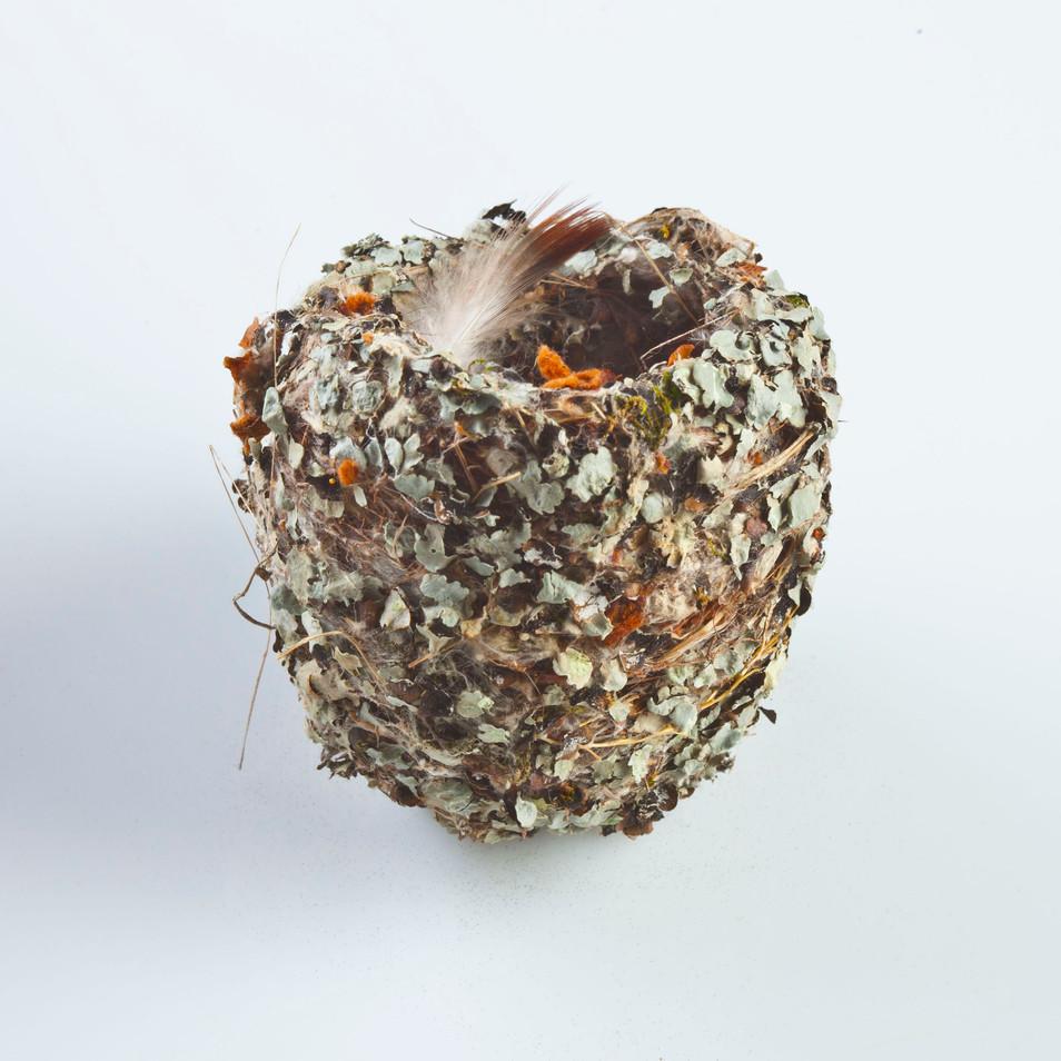 Humingbird - 1