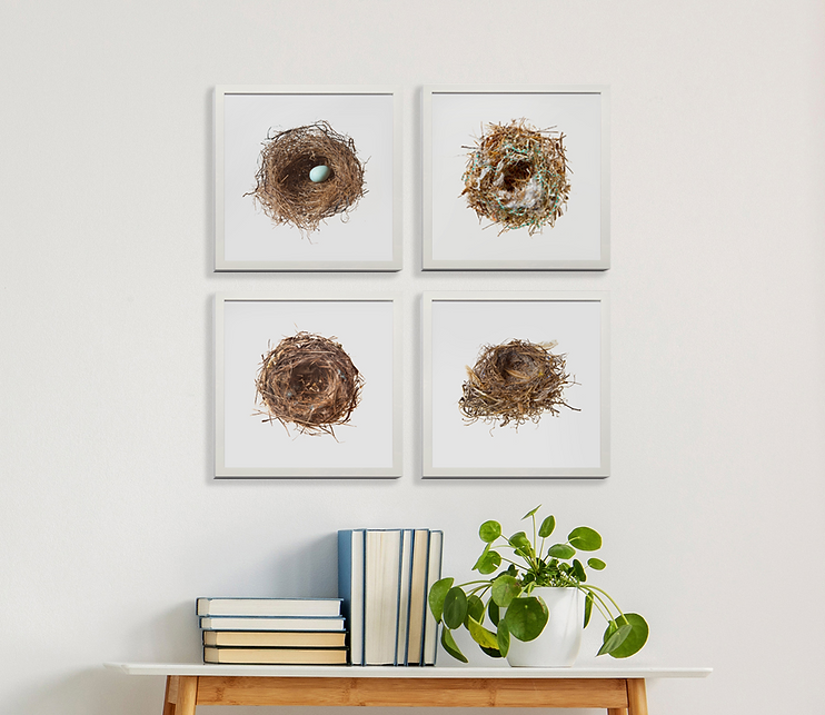 Nest Grouping (2).png